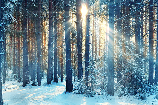 Januarywinterlandscapeintheforest